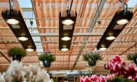 Pro-Emit LED - Pflanzenbeleuchtung